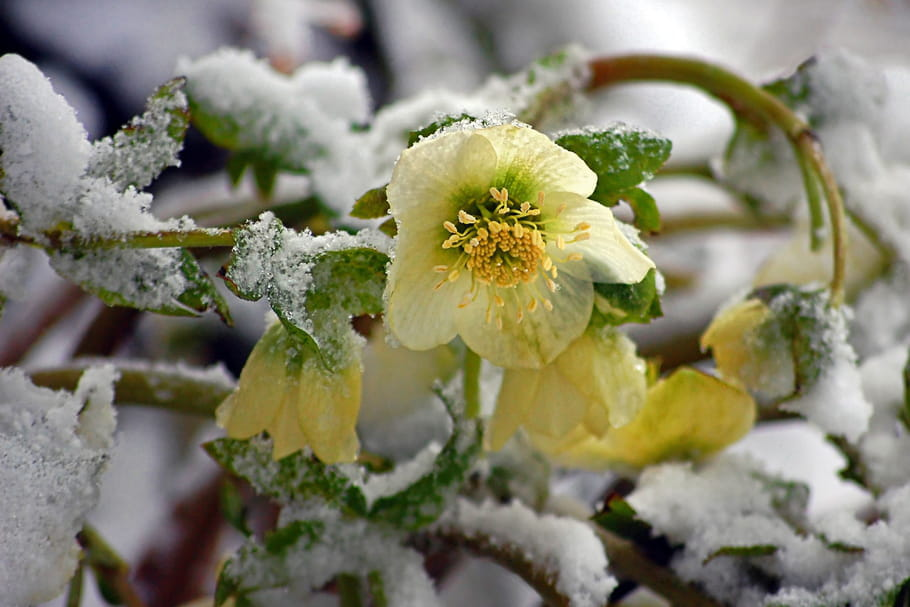 Floraison en janvier