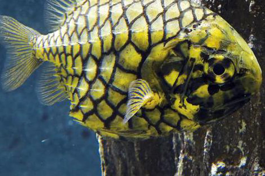 Grand Aquarium de Saint-Malo: toutes les infos pratiques