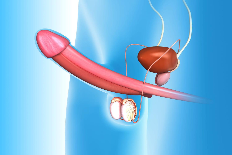 Injection intracaverneuse: comment la faire, prix, effets secondaires