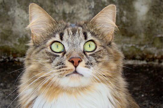 Pipper, un chat étonnant