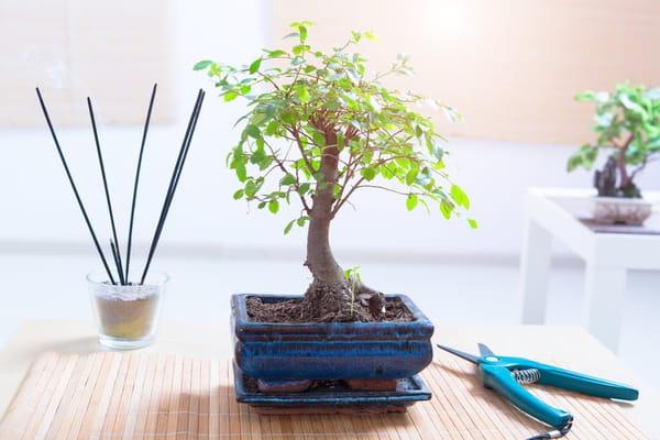 tailler-un-bonsai