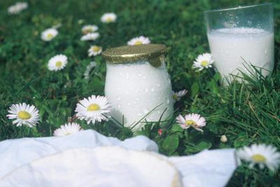 Les yaourts allégés diminuent le risque d'AVC