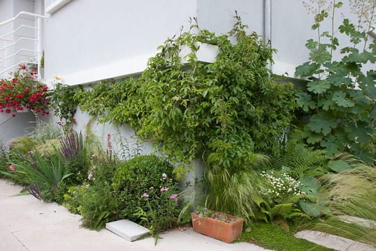 Un jardin prêt à évoluer