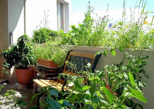 Terrasse v g tale en appartement - Arbre pour terrasse appartement ...