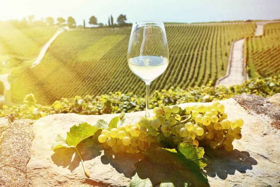 Vin: trois expériences insolites