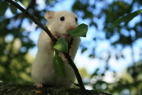 Hamster sur un arbre