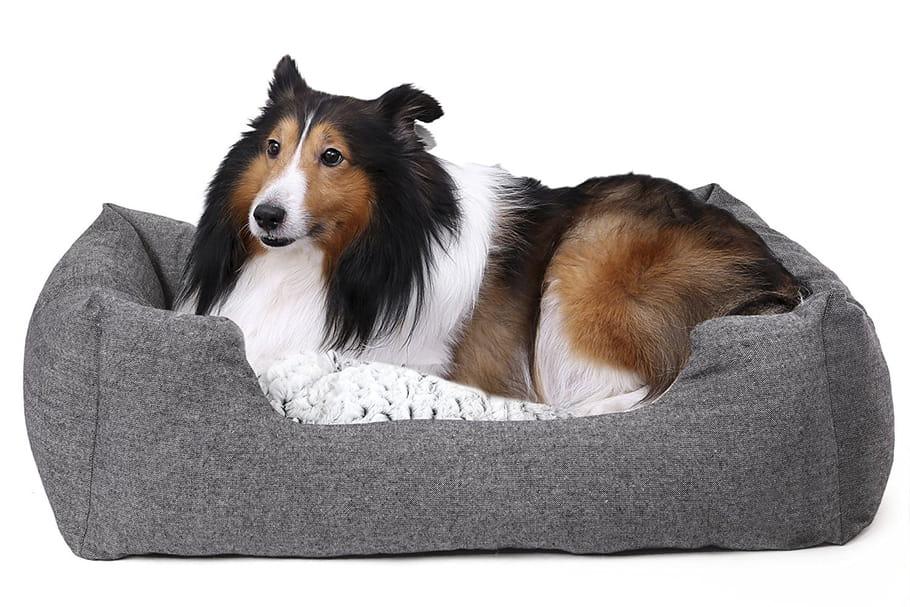Meilleurs paniers pour chiens: guide d'achat