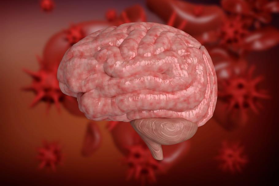 Méninges: définition, anatomie, schéma, rôle, cancer