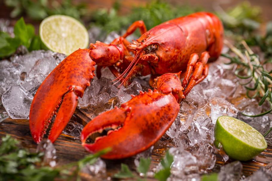 Comment cuire un homard?