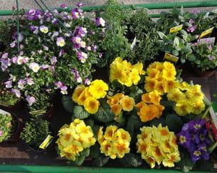 plants de fleurs et herbes aromatiques
