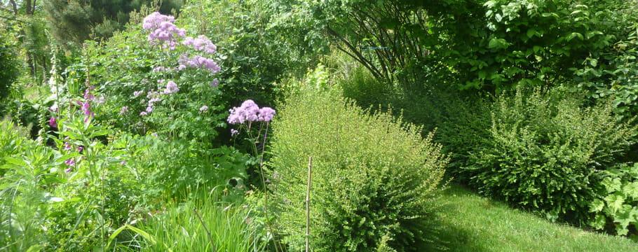 Cr er un jardin anglais id es de v g taux inspirations for Jardin anglais vegetaux