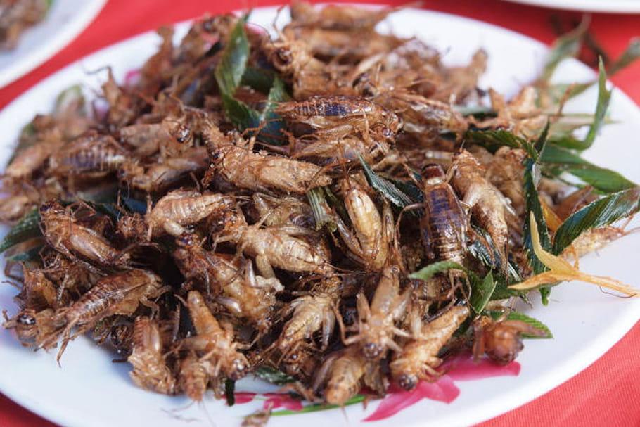 Consommer des insectes n'est pas sans risque