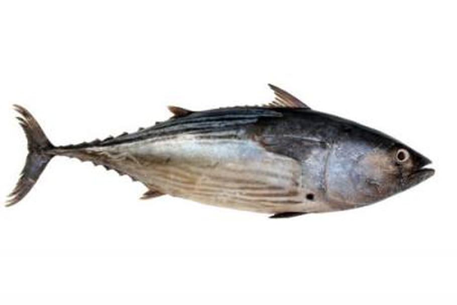 Oméga 3et poisson: pour vivre mieux, plus longtemps!