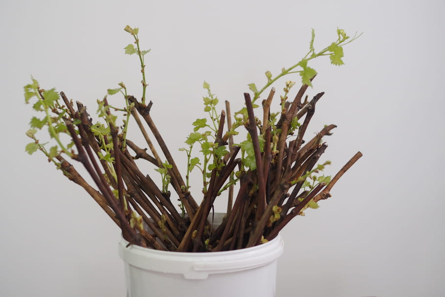 Comment multiplier les plantes?