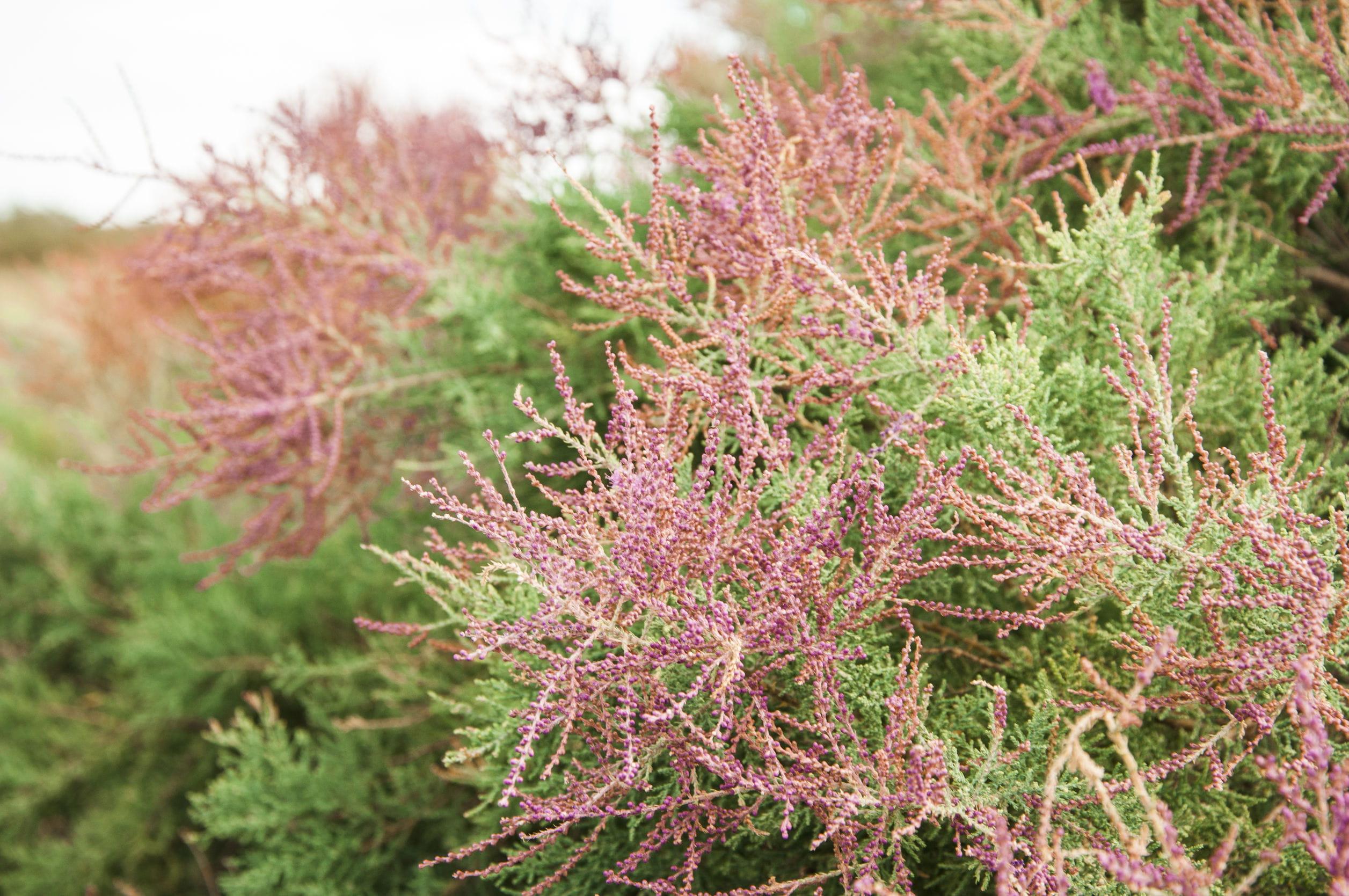 Arbuste Pour Terrain Calcaire 10 arbres rustiques à planter