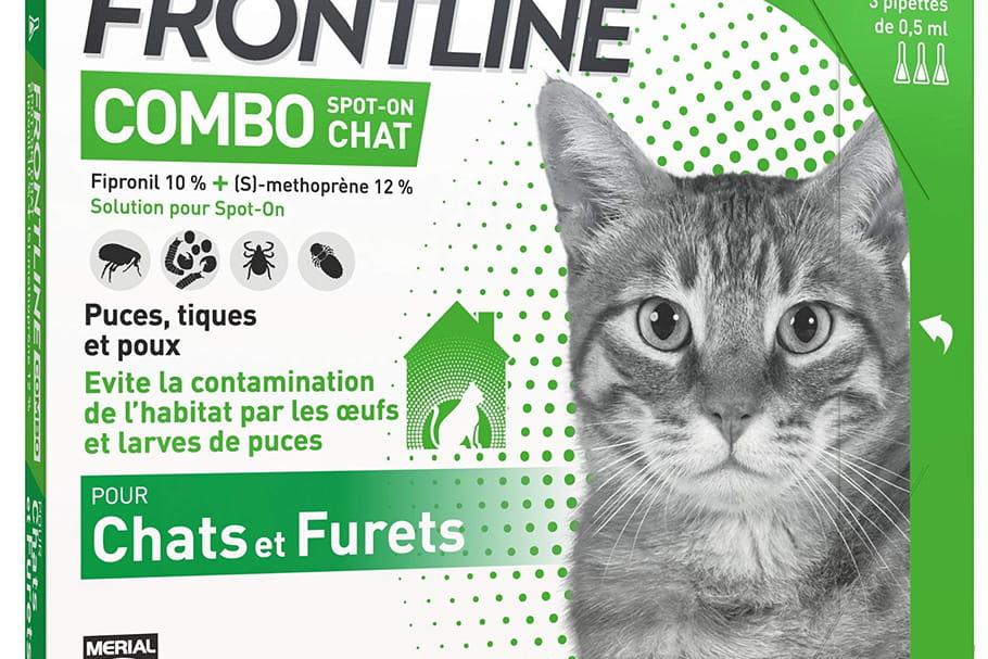 Les meilleurs vermifuges pour chats: notre sélection pour sa santé