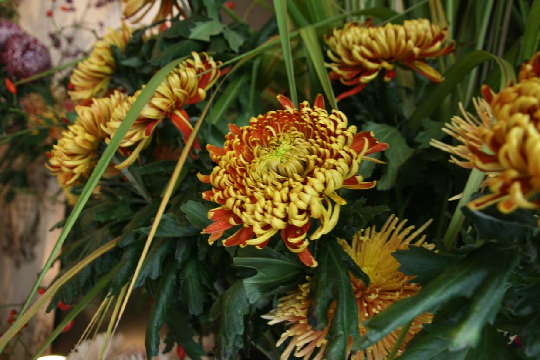 Quelles Fleurs Planter Fin Aout fleurs de saison : quelles variétés en automne ?