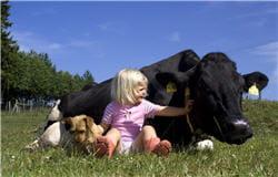 les enfants des fermes seraient-ils moins allergiques ?