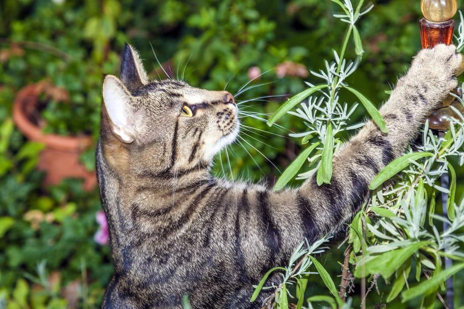 Répulsifs contre les chats
