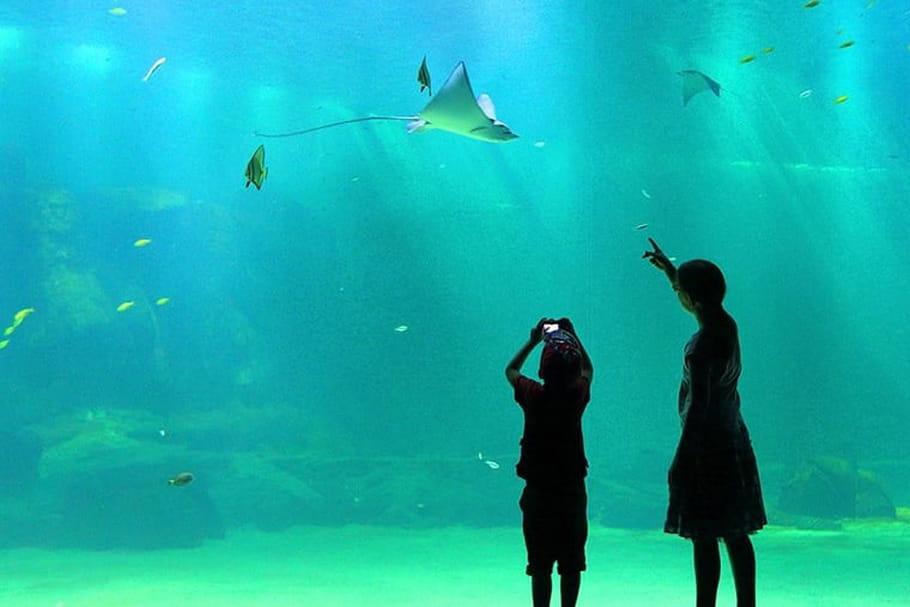 Nausicaa: un nouveau bassin pour plonger au cœur des océans