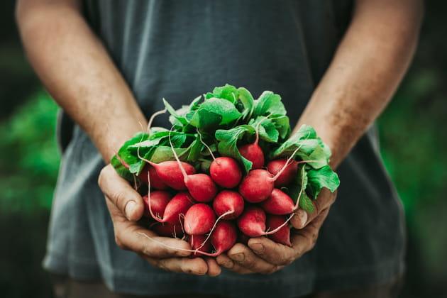 Les fanes de légumes