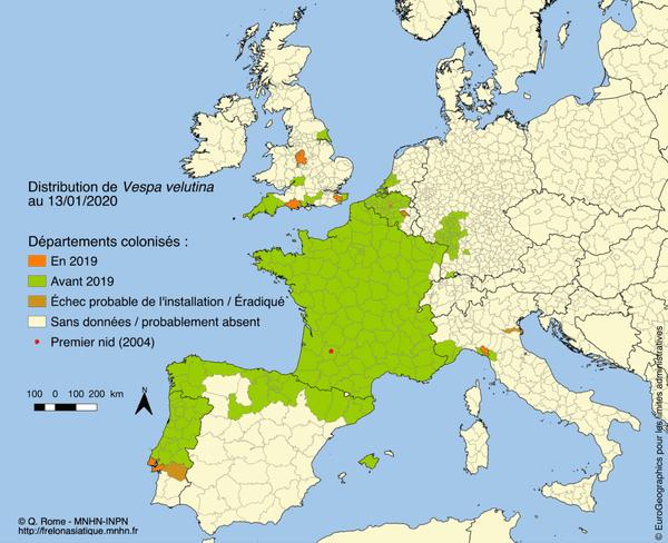 Carte 2020 de la présence du frelon asiatique en France