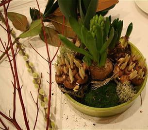installez la mousse et le lichen après avoir disposé les bulbes.