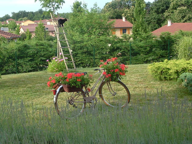 Géraniums à bicyclette