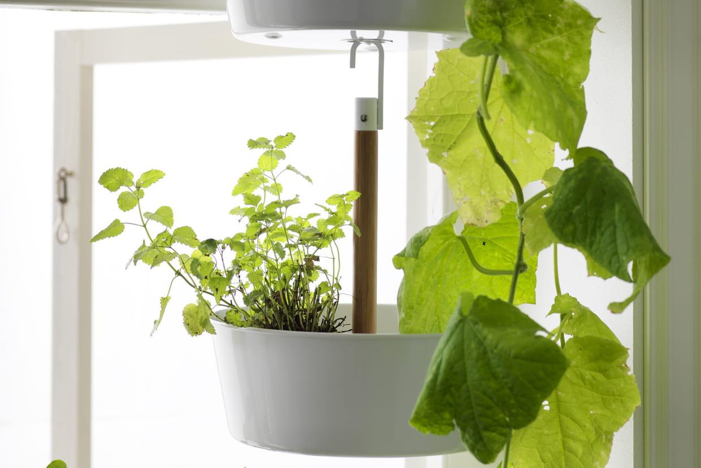 Jardinière À Suspendre Ikea jardinière suspendue bittergurka d'ikea