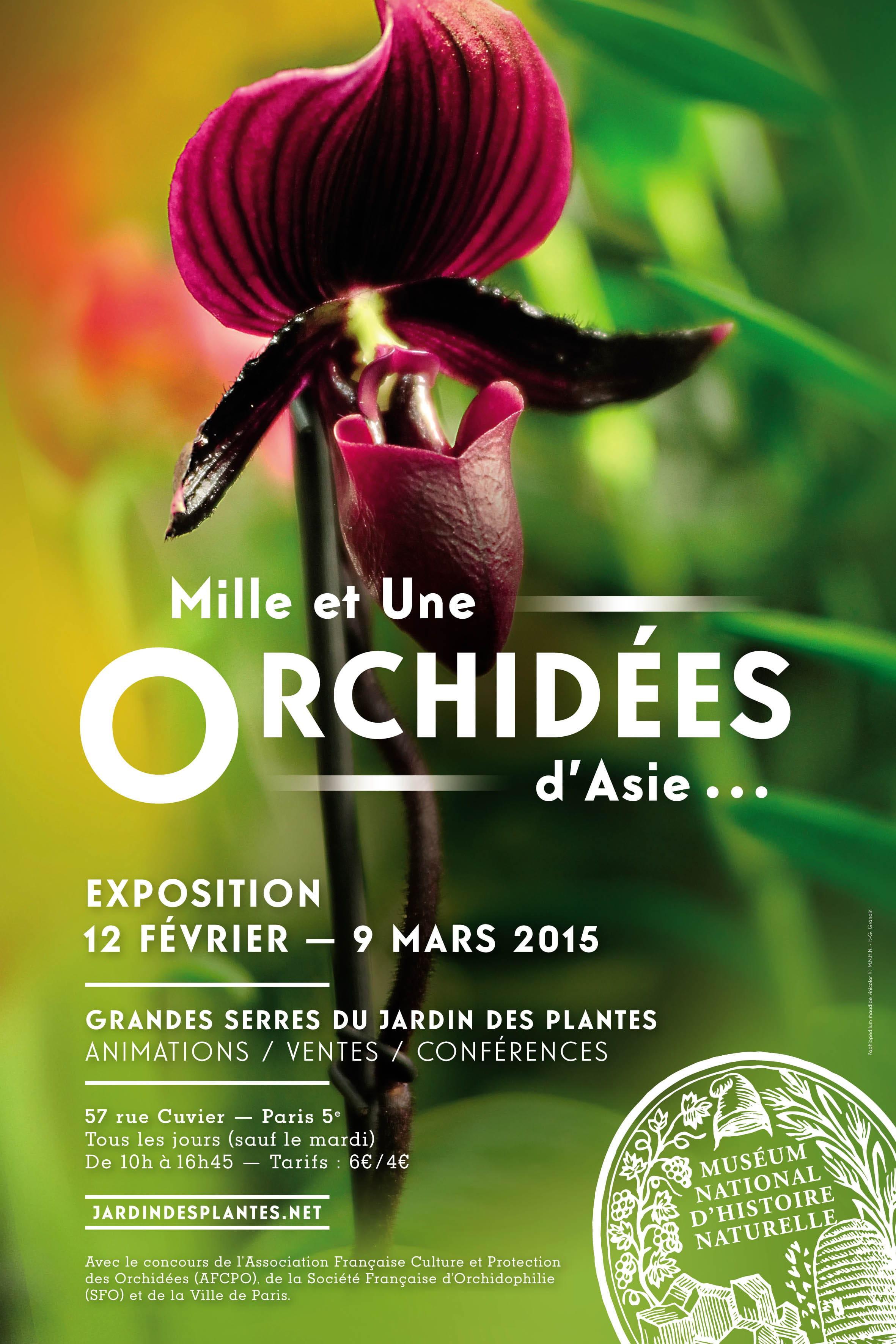 L\'orchidée fait la belle sous les Grandes Serres