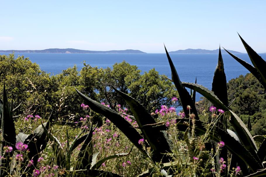 Ces plantes incontournables dans un jardin méditerranéen