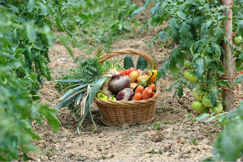 Les bonnes associations de légumes dans un potager bio [TABLEAU]