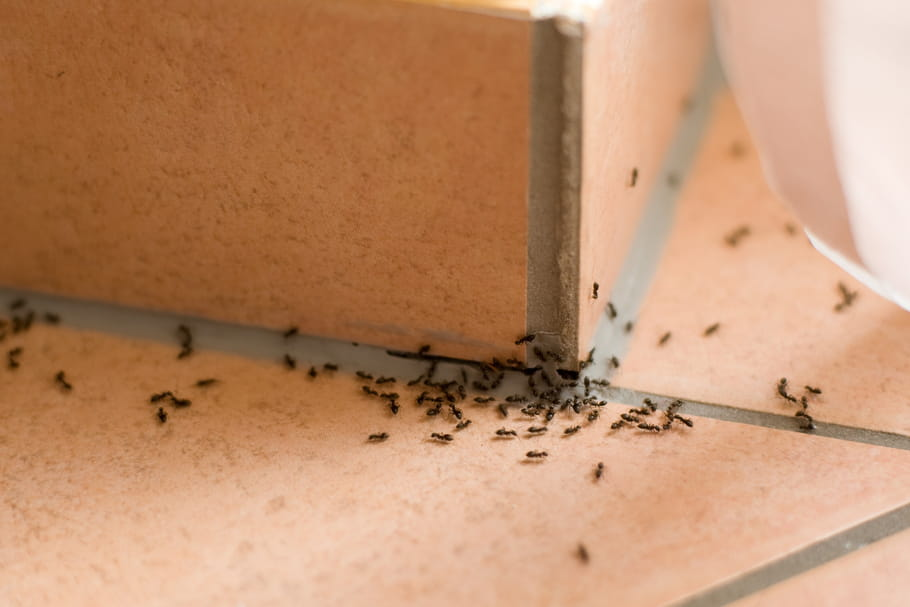 Se débarrasser des insectes de la maison