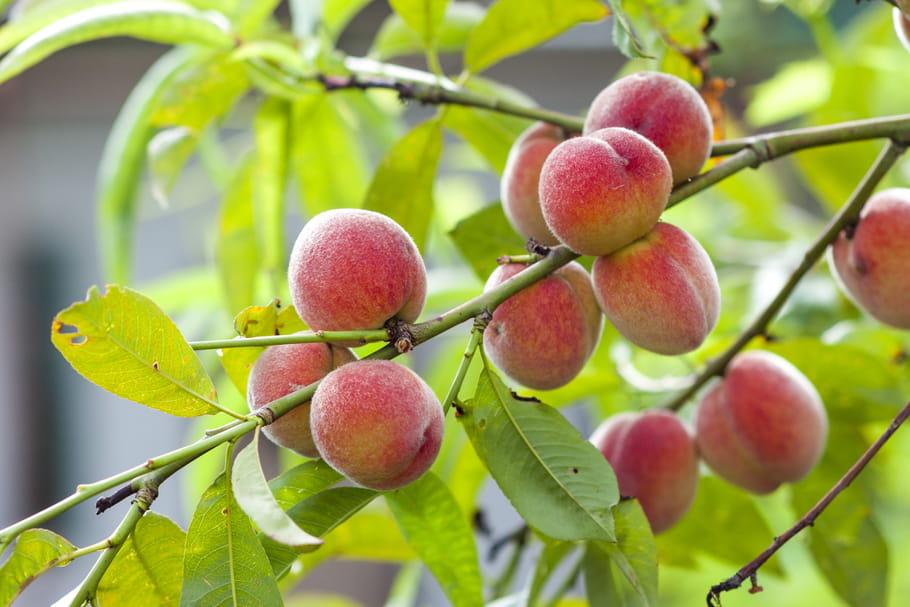 Jours fruits et graines du calendrier lunaire 2021 : quelles