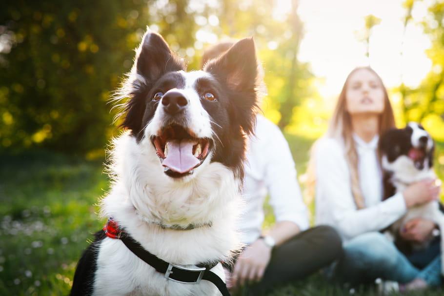 Quelle race de chien faut-il choisir?