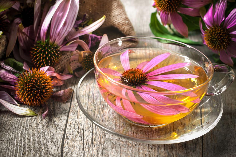 Echinacea syrup
