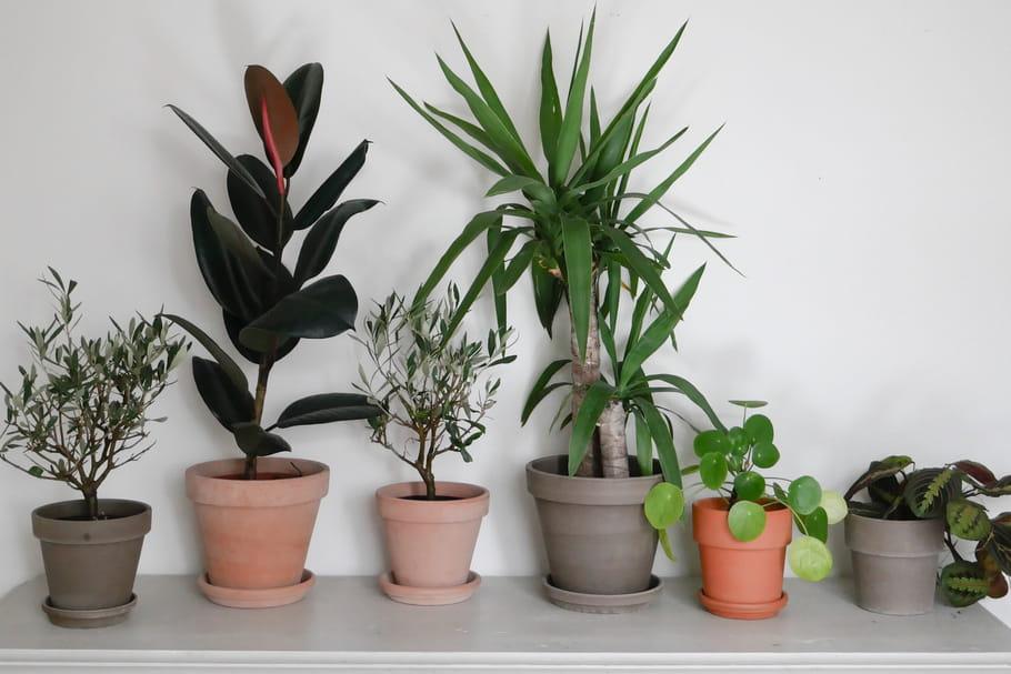 Le Jardin Éphémère de Maison Bouture plante son décor à Paris