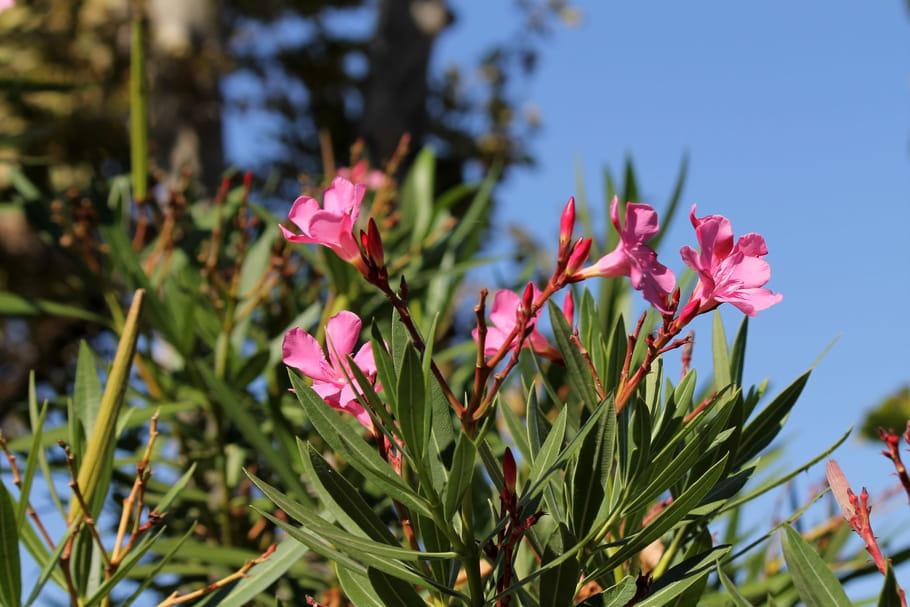 Préparer ses plantes d'été à passer l'hiver