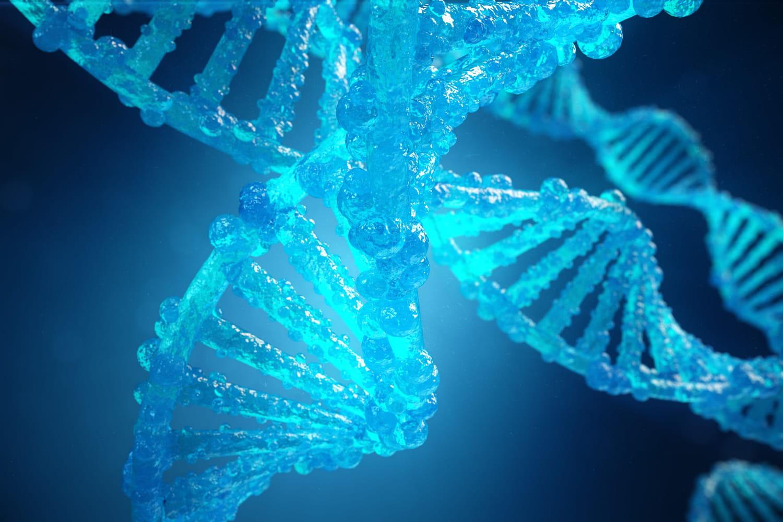 Phénotype: définition, rhésus, différence avec le génotype