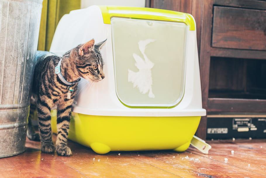 Meilleure maison de toilette pour chat: notre sélection pour félin