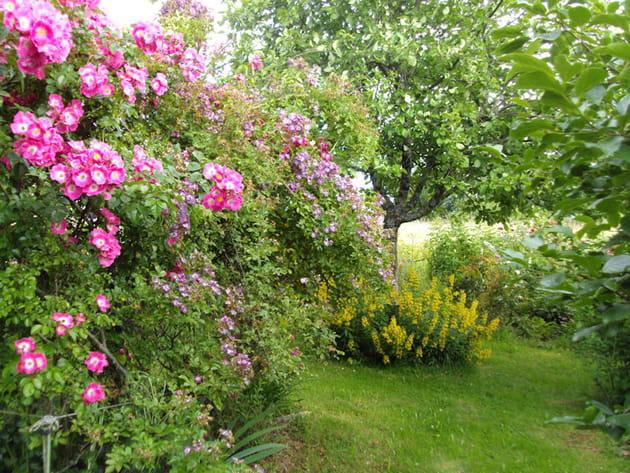un jardin fleuri - Jardin Fleuri