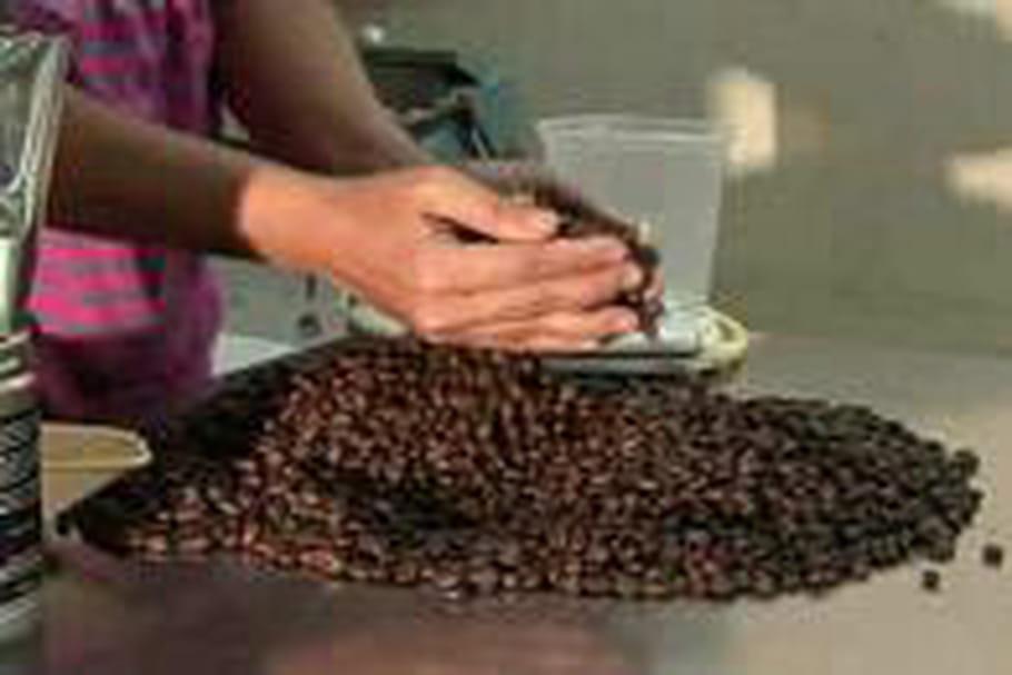 Un café philippin vendu 400 euros le kilo