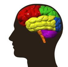 chaque type de mémoire correspond à une zone très précise du cerveau.