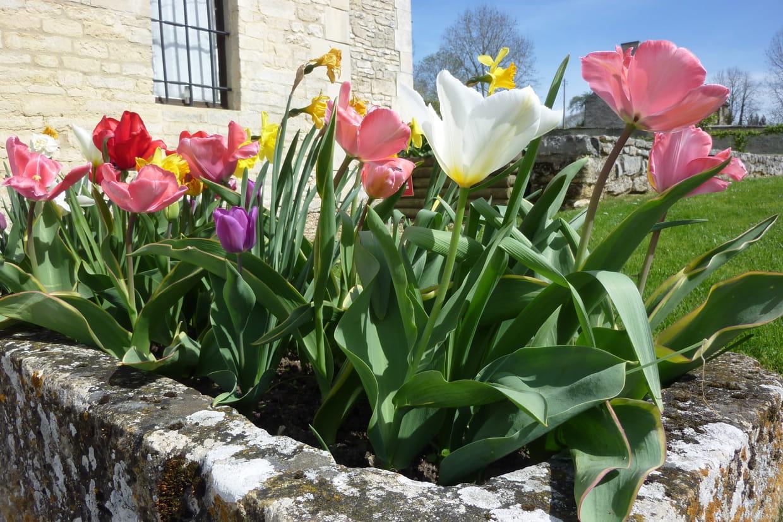 Doit On Deterrer Les Oignons De Tulipes planter les bulbes de printemps