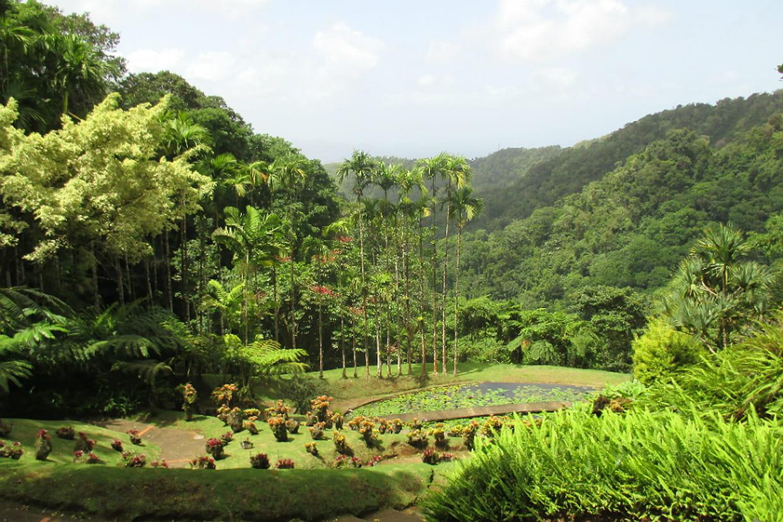 Le jardin de balata incroyable jardin botanique for Le jardin des 6