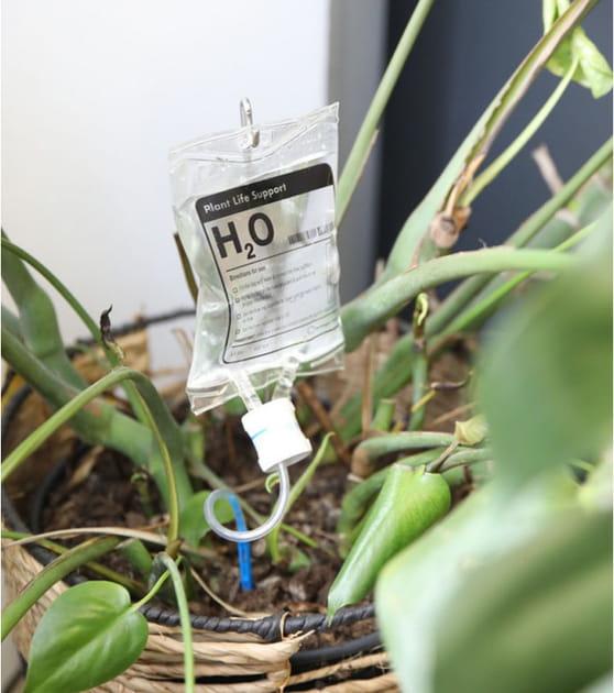 L'objet du désir: la perfusion H2O pour les plantes de L'avant gardiste
