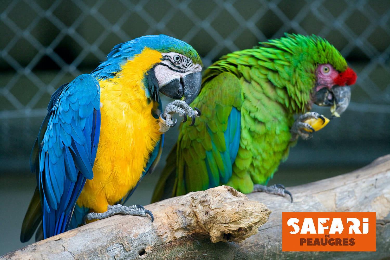 Safari de Peaugres: animaux, jeux d'eau et cabanes perchées