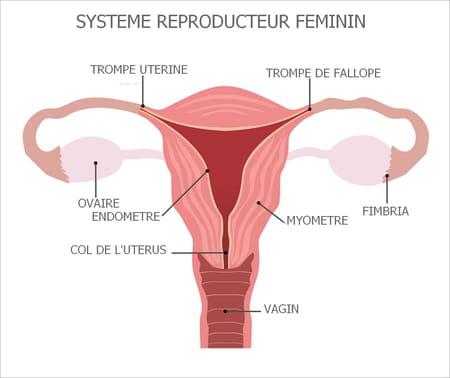 schéma col utérus