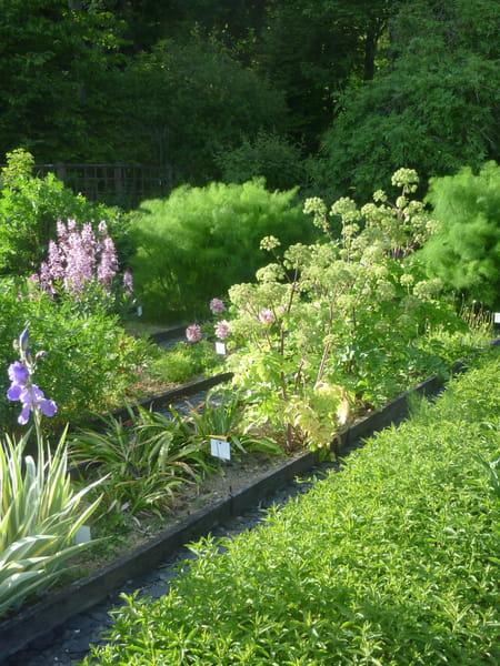 Jardin conseil pour le jardinage l 39 am nagement et la for Entretien jardin saintes