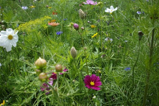 Un jardin aux allures de prairie fleurie for Jardin eden prairie